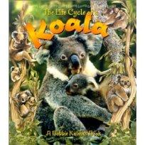 Life Cycle of A Koala- Kid World Citizen