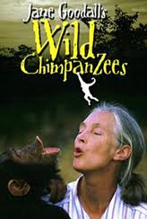 Jane Goodall Wild Chimpanzees- Kid World Citizen