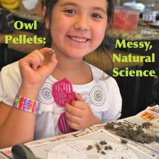 Hands-On Learning: Dissecting Owl Pellets + Extension Activities