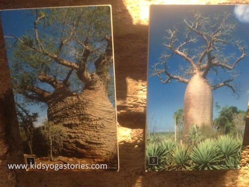 Baobab tree Yoga for Kids- Kid World Citizen