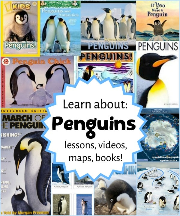Learn about Penguins Resources for Kids- Kid World Citizen
