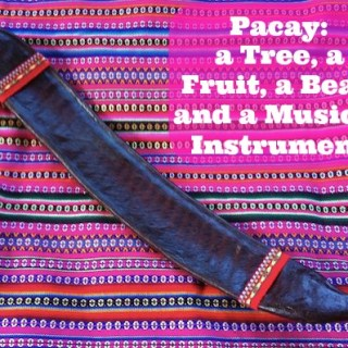 Pacay: A Tree, A Fruit, A Bean and A Musical Instrument