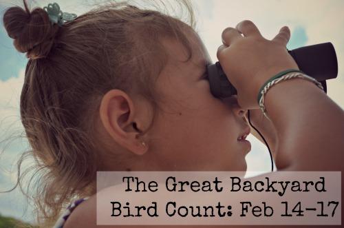 Great Backyard Bird Count- Kid World Citizen