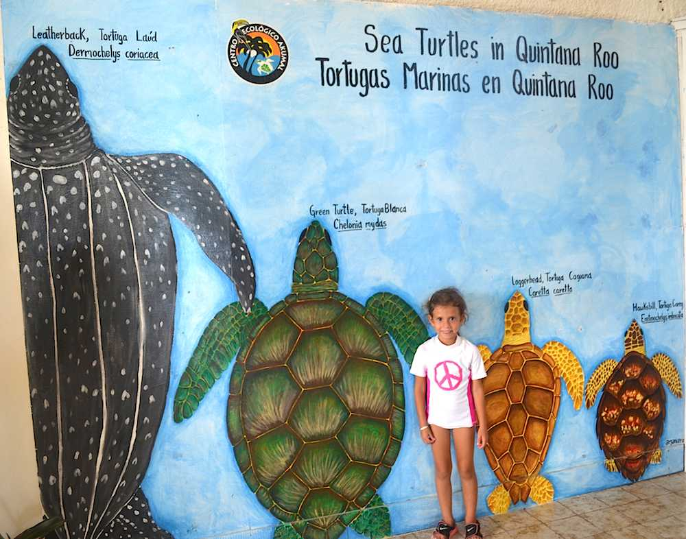 Sea Turtles Mexico Kids- Kid World Citizen