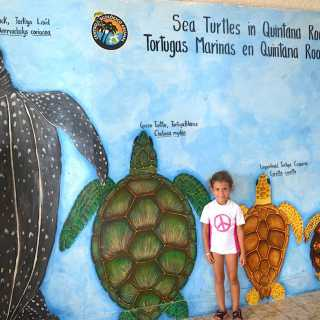 4 Ways to Experience Sea Turtles in Mexico