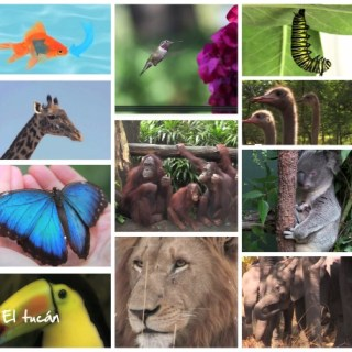 Earth Day Videos about Animals for Kids from Project Explorer