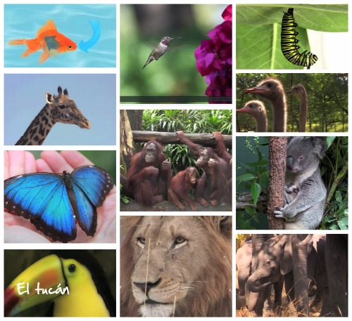 Earth Day Videos About Animals for Kids- Kid World Citizen