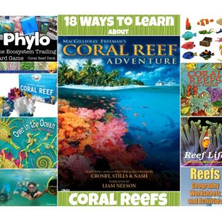 18 Ways to Teach Kids about Coral Reefs