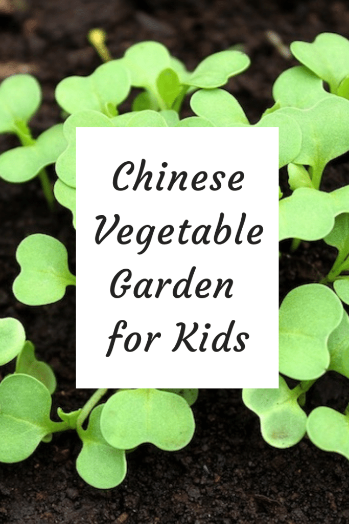 Chinese Vegetable Garden for Kids- Kid World Citizen