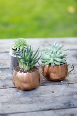 20 Cute DIY Tiny Plants Ideas 25