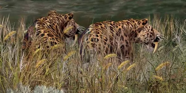 Saber Tooth Tiger Habitat