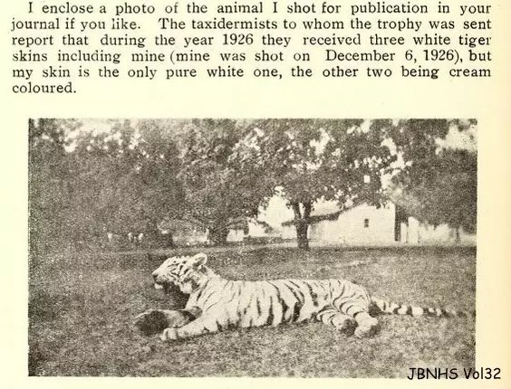 WHite tiger history