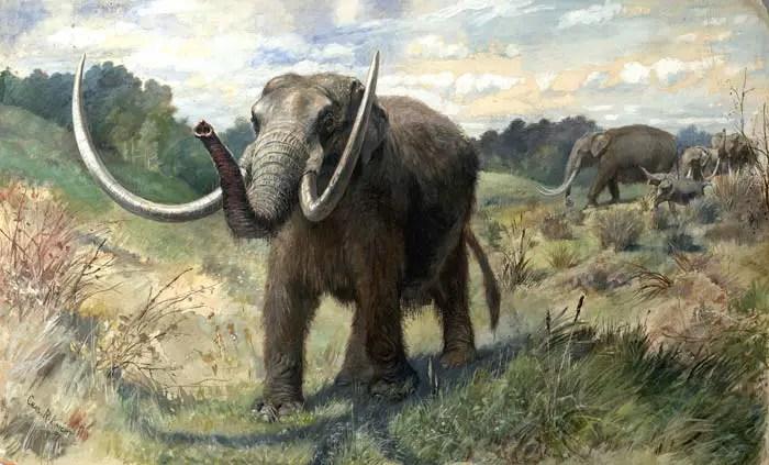 mastodon saber tooth tiger diet