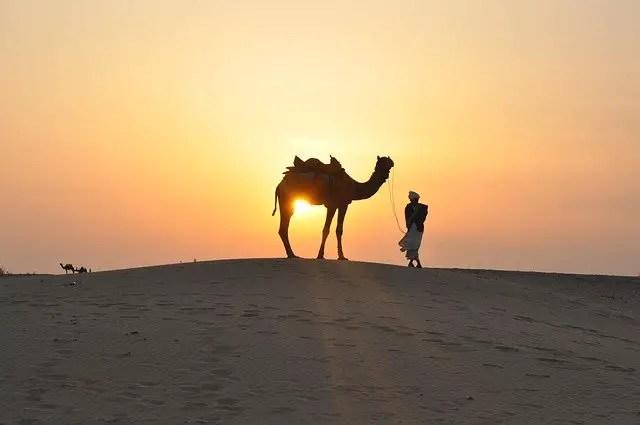 Camel size