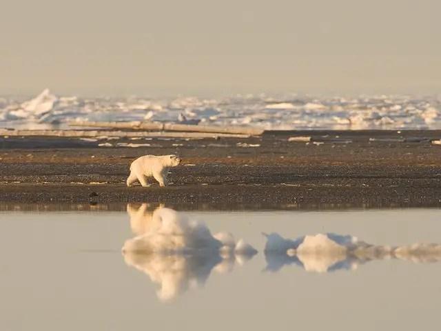 Where Do Polar Bears Livein the arctic