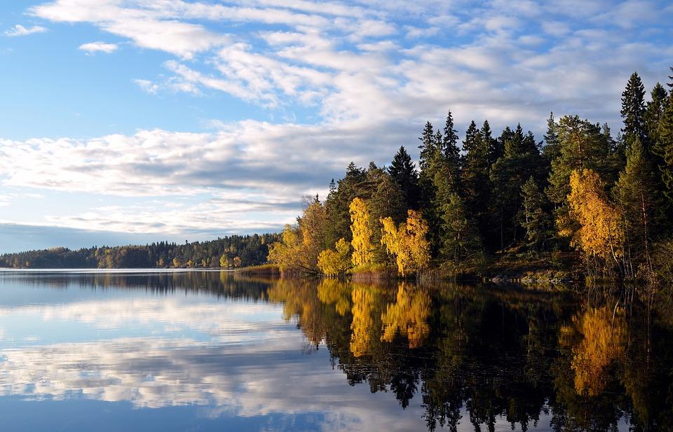 Bossen en meren zweden