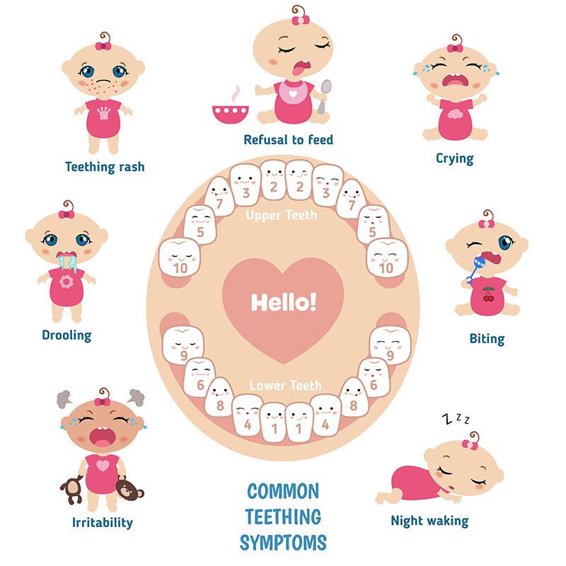 Volgorde van doorkomende tanden melkgebit baby
