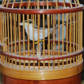 Birdcage_tweet