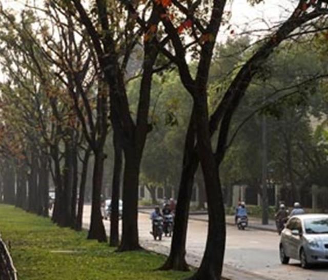 Cây xanh trên phố Kim Mã - Ảnh: Lê Anh Dũng