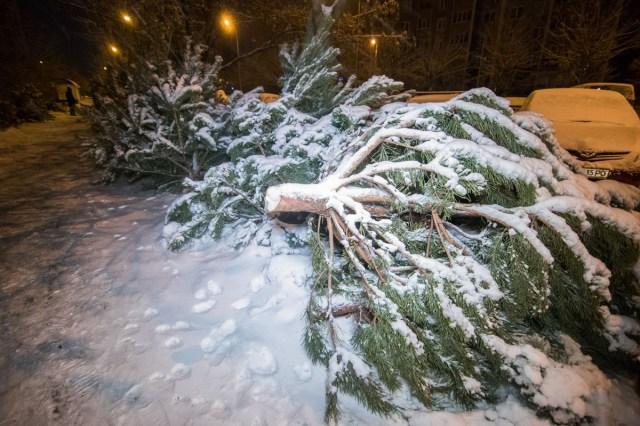 Двое неизвестных пытались украсть елку