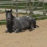 Paard in de paddock