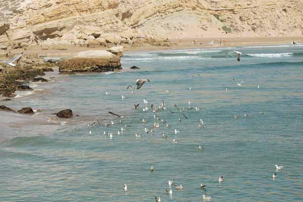 جريمة بشعة في آيت ورير.. ذبحا تاجرا وألقيا جثته في البحر وسرقا أمواله