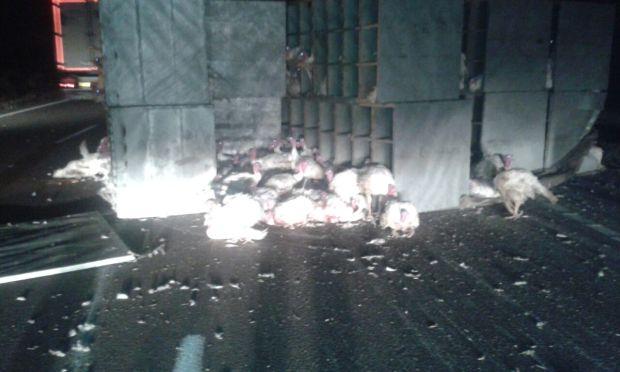 """الطريق السيار الرباط/ كازا.. انقلاب شاحنة تحمل """"بيبي"""" (صور)"""