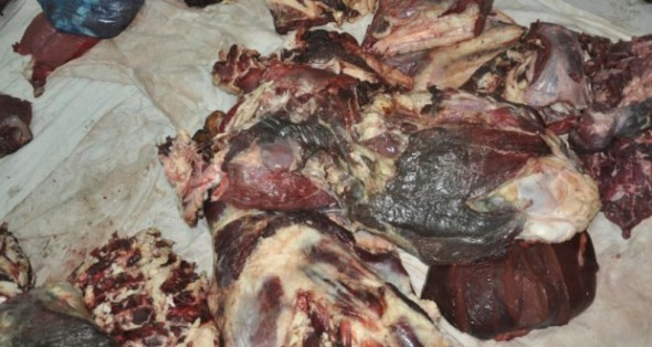 لحوم/ أسماك/ مصبرات/ بيض.. إتلاف مئات الأطنان من المواد الفاسدة