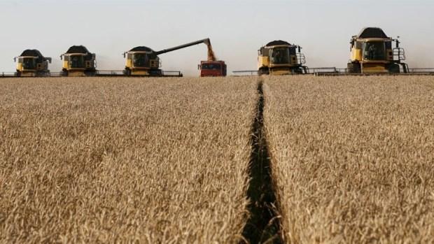 بموجب اتفاق أسعار تفضيلية.. المغرب يطرح مناقصة لشراء كميات من القمح اللين الأمريكي