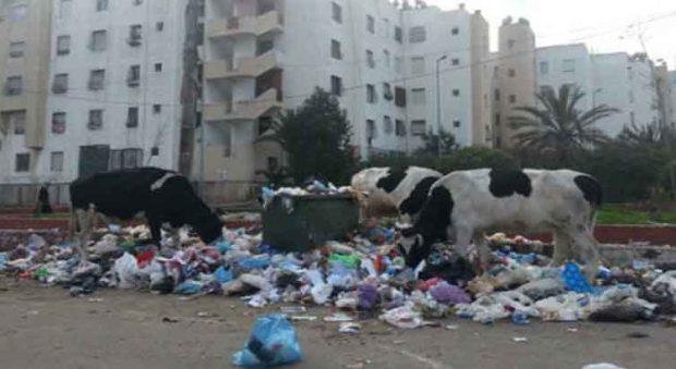 كل حاجة وثمنها.. المغاربة خلّصو 33 مليار درهم بسبب التدهور البيئي