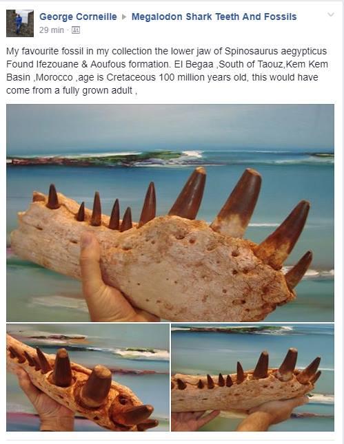 الثمن ديال طرف منو داير 5 آلاف دولار.. إيرلندي يبيع قطعة من ديناصور مغربي!