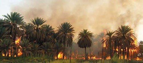 كلميم .. حريق يأتي على 200 نخلة في واحة تيغمرت