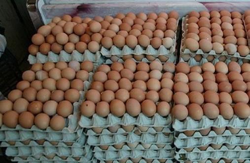 اليوم الوطني للبيض.. كل مغربي كياكل 180 بيضة فالعام!