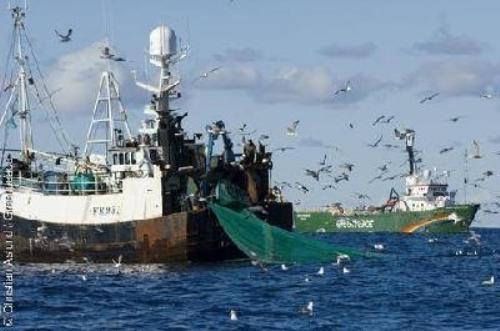 بعد قرار محكمة العدل الأوروبية.. المغرب يخوض معركة السمك!!