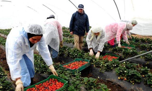 الفواكه الحمراء الصغيرة في اللوكوس.. 3 ملايير درهم و6 ملايين يوم عمل