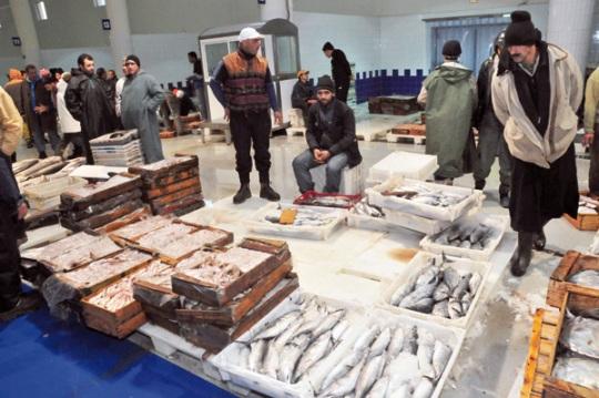 بالأرقام.. أسباب ارتفاع أسعار السمك