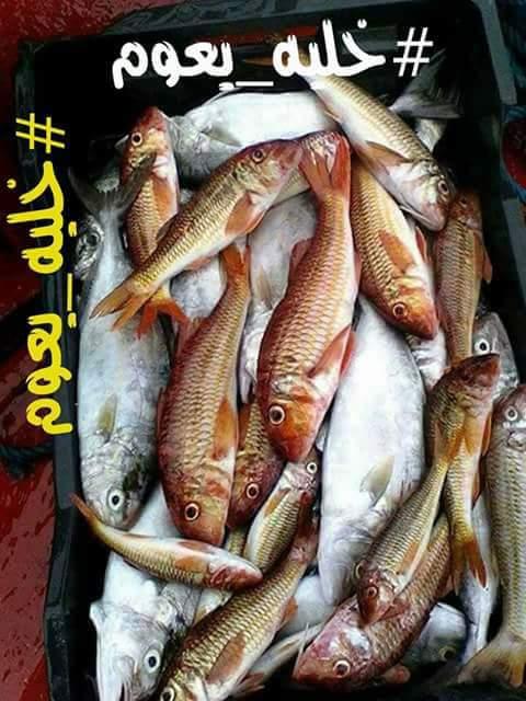 بعد ارتفاع أسعار الأسماك.. فايسبوكين يطلقون هاشتاغ #خليه_يعوم!