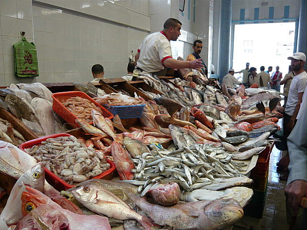 """رئيس فيدرالية الصيد البحري: """"الشناقة"""" هوما اللي كيرفعو الأسعار… والسردين ما خاصوش يفوت 5 دراهم!!"""