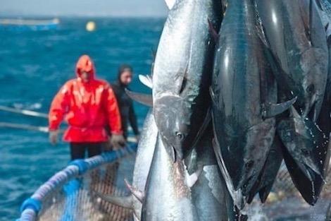 اتفاقية الصيد البحري مع الاتحاد الأوروبي.. الانتصار المغربي