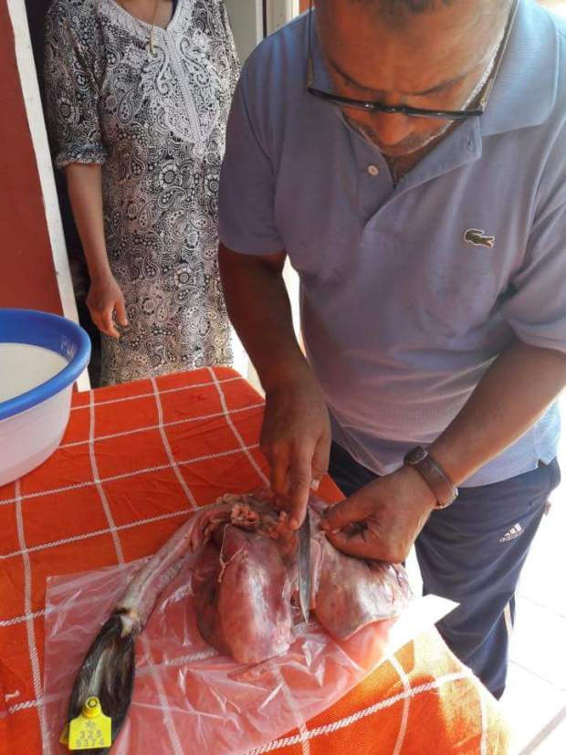 """العيد الكبير داز بلا مشاكل.. """"لونسا"""" حاضية اللحم لا يخضار! (صور)"""