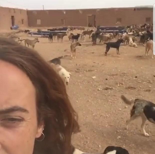 هاد الشي بزاف.. أكثر من 3 ملايين كلب في شوارع المغرب!! (فيديو)