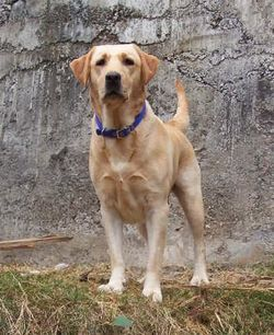 كلب ينتظر صاحبته في مكان وفاتها.. الحيوان فيه الخير!