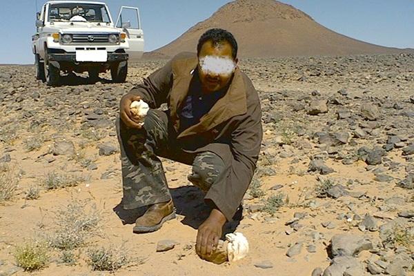 مفيد صحيا.. صحراويون يواجهون خطر الألغام بحثا عن الترفاس!