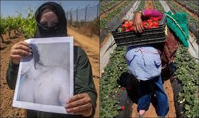 """بسبب غياب أدلة.. حفظ قضية """"الاعتداء الجنسي"""" على عاملات الفراولة في إسبانيا!"""