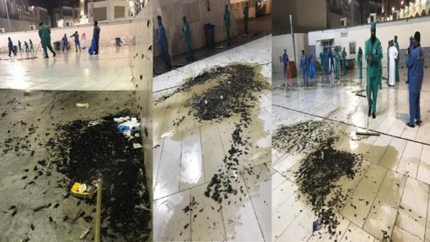 ما كاين لا غضب لا لعنة.. عدم النظافة والإهمال سبب كثرة الصراصير في الحرم الشريف