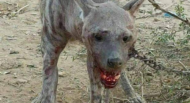 صورة افتراس ضبع لطفل.. من اليمن إلى زاكورة!
