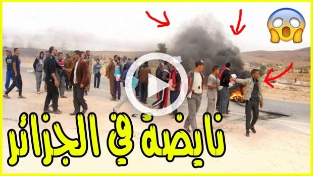 نايضة في الجزائر