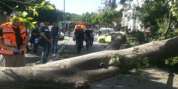 كازا.. سقوط شجرة داخل مؤسسة تعليمية ترسل 3 تلميذات إلى المستشفى