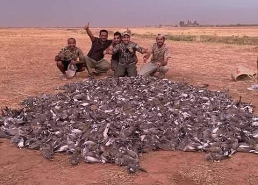 """ضواحي مراكش.. خليجيون يرتكبون """"مجزرة"""" في حق طيور السمان"""
