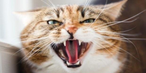 بسبب عضة قطة تعرض لها خلال عطلته في المغرب.. وفاة مهاجر مغربي في إسبانيا
